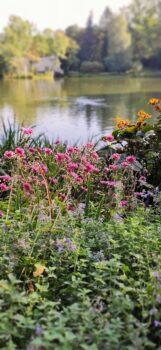 Kwiaty przy stawie w Łazienkach